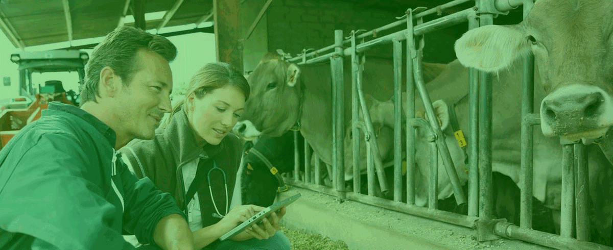 Strengthening the role of farm vets with data-led insight